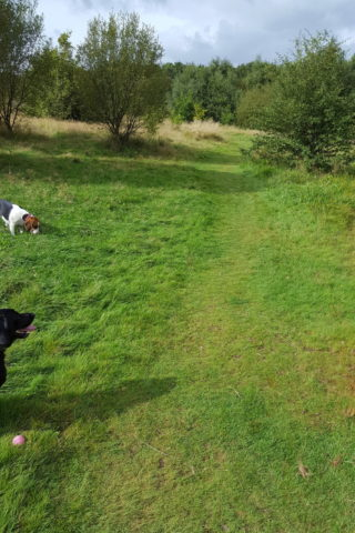 Dog walk at Three Sisters & Viridor Woods walk photo