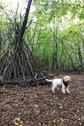 Dog walk at Thrift Wood Nature Reserve photo