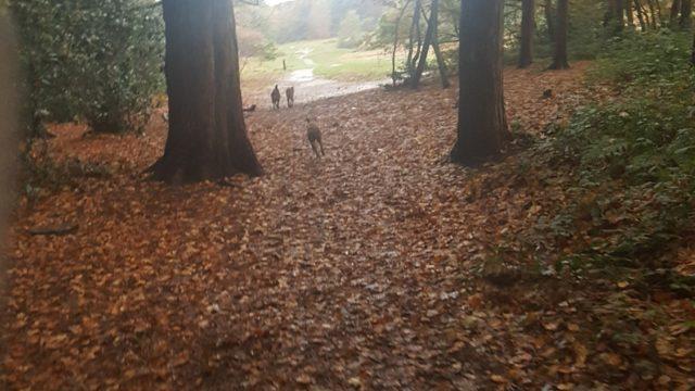 Dog walk at Thurstaston Common