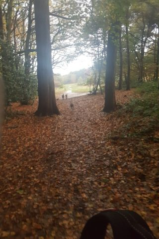 Dog walk at Thurstaston Common photo
