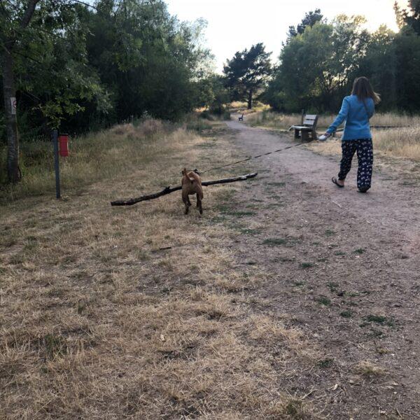 Dog walk at Tiddenfoot Waterside Park