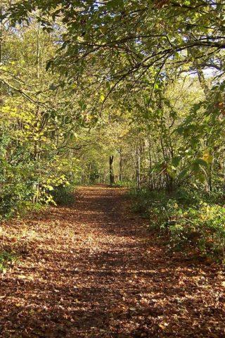 Dog walk at Tile Hill Woodlands photo