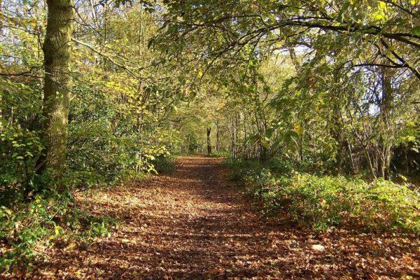 Tile Hill Woodlandsphoto