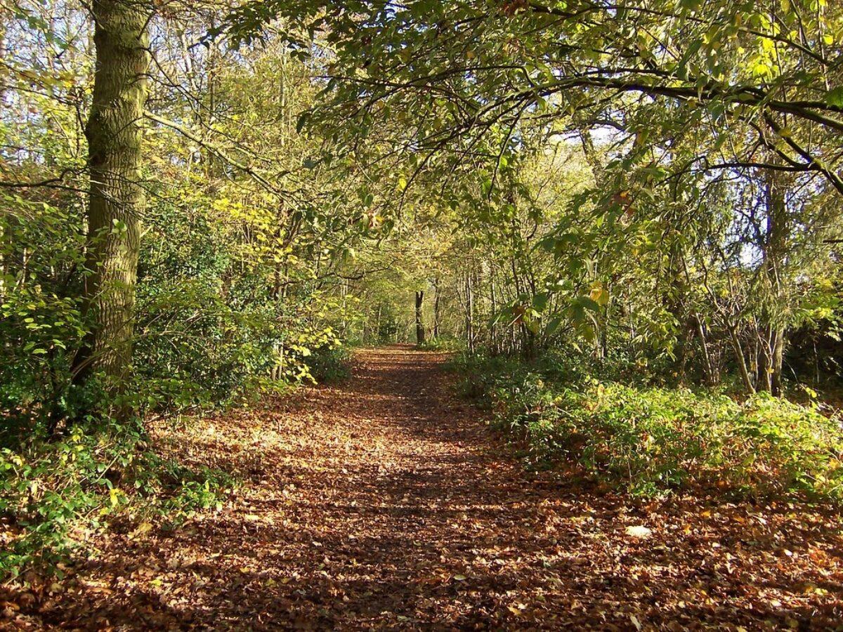 Tile Hill Woodlands large photo 1