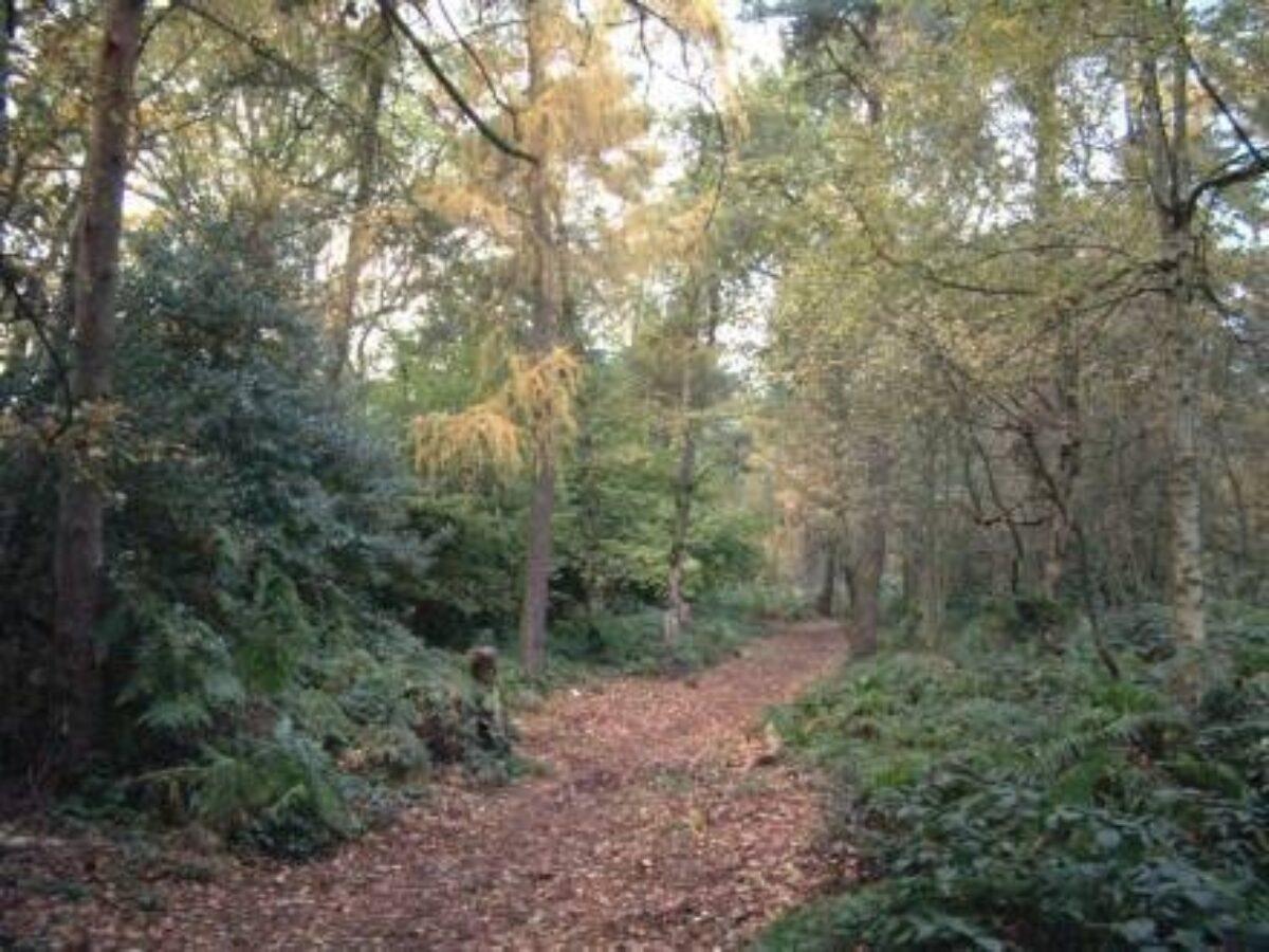 Tile Hill Woodlands large photo 2