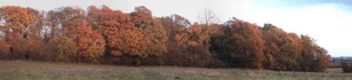 Tile Hill Woodlands large photo 3