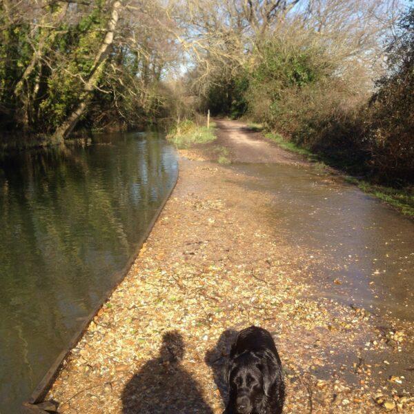 Titchfield Canal photo 1