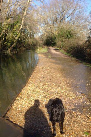 Dog walk at Titchfield Canal photo