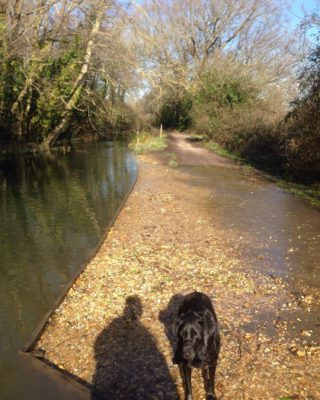 Dog walk at Titchfield Canal