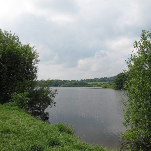 Dog walk at Tittesworth Reservoir