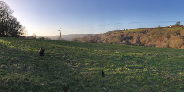 Torrington Common