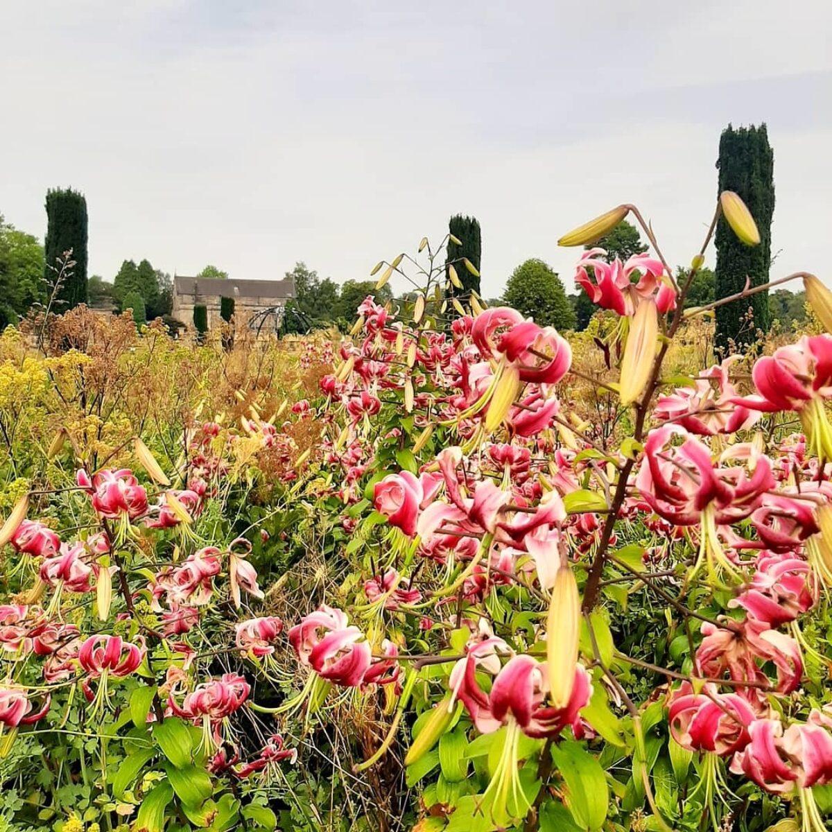 Trentham Gardens large photo 12