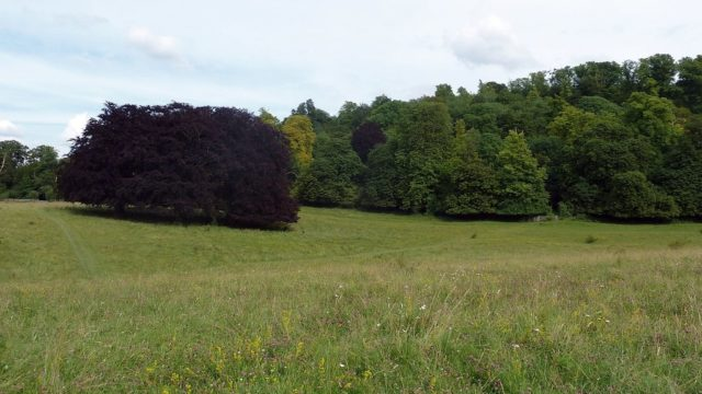 Dog walk at Tring Park