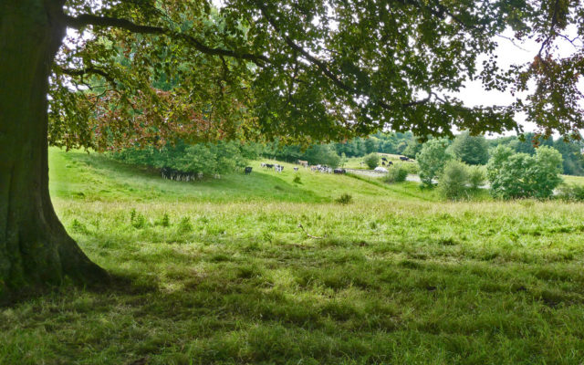 Tring Park Dog walk in Hertfordshire