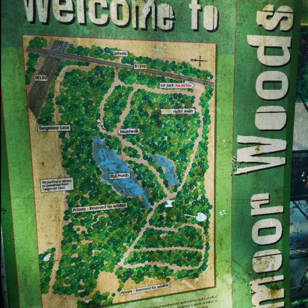 Twigmoor Woods photo 2