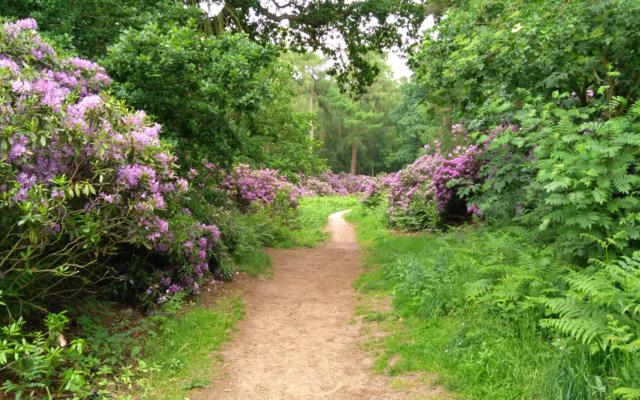 Twigmoor Woods Dog walk in Yorkshire (South)
