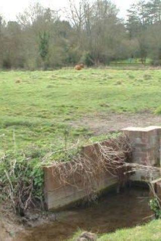 Dog walk at Twyford / Shawford Water Meadows photo