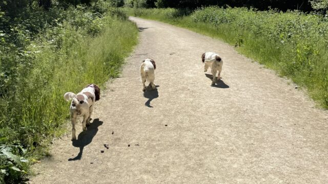 Dog walk at Twyford Woods