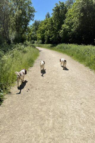 Dog walk at Twyford Woods photo
