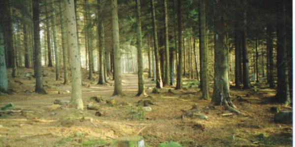 Tyrebagger Woods
