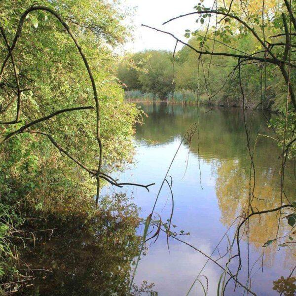 Ufton Fields Nature Reserve photo 1