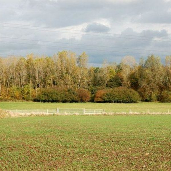 Ufton Fields Nature Reserve photo 4