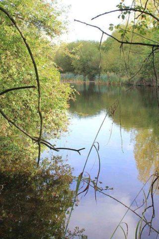 Dog walk at Ufton Fields Nature Reserve photo