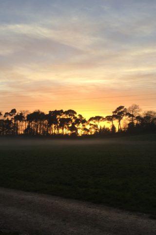 Dog walk at Upton Country Park photo