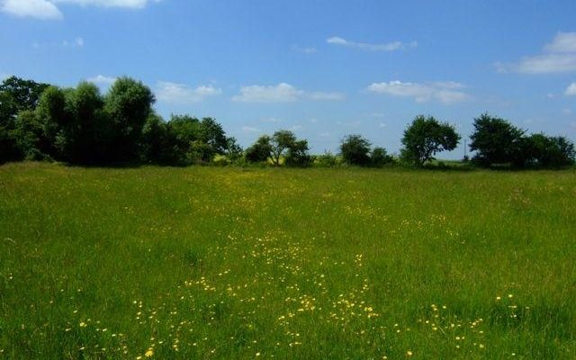 Upwood Meadows Dog walk in Cambridgeshire