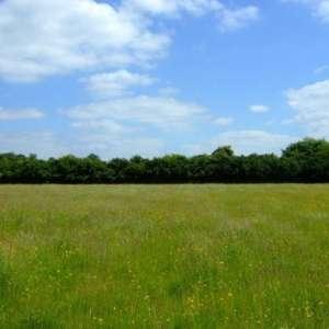 Upwood Meadows