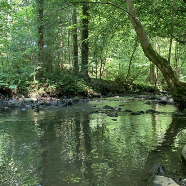 Valleyfield Woodland Park photo 3