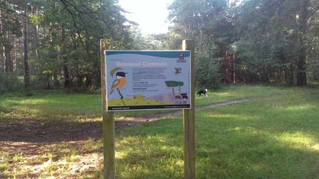 Dog walk at Velmead Common, Fleet