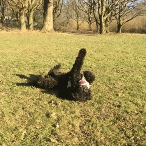 Dog walk at Venny/ Lower Lodge Farm Colne Nature Reserve