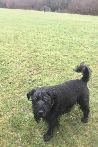 Dog walk at Venny/ Lower Lodge Farm Colne Nature Reserve photo