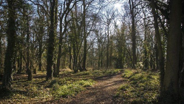 Dog walk at Vincient Woods, Chippenham