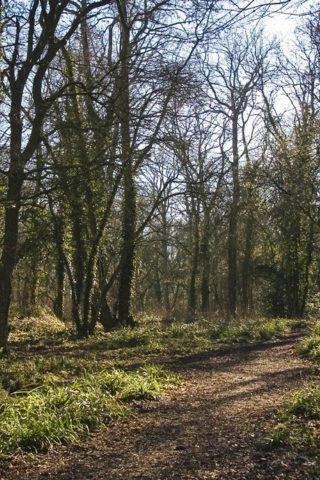 Dog walk at Vincient Woods, Chippenham photo