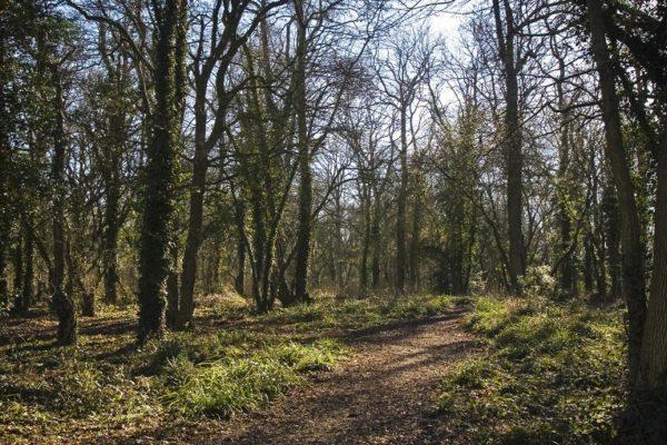 Vincient Woods, Chippenhamphoto