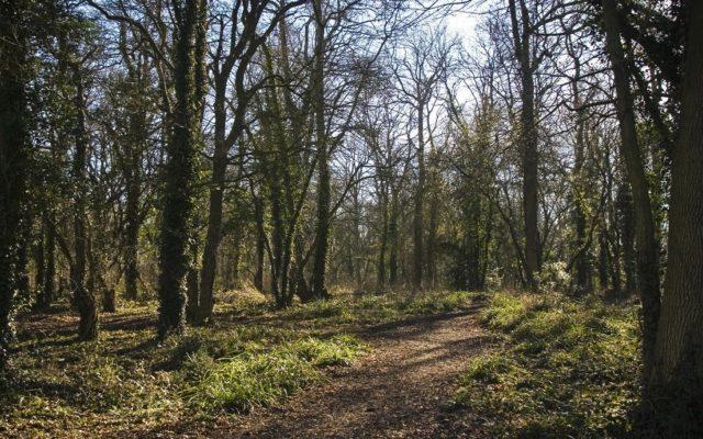 Vincient Woods, Chippenham Dog walk in Wiltshire