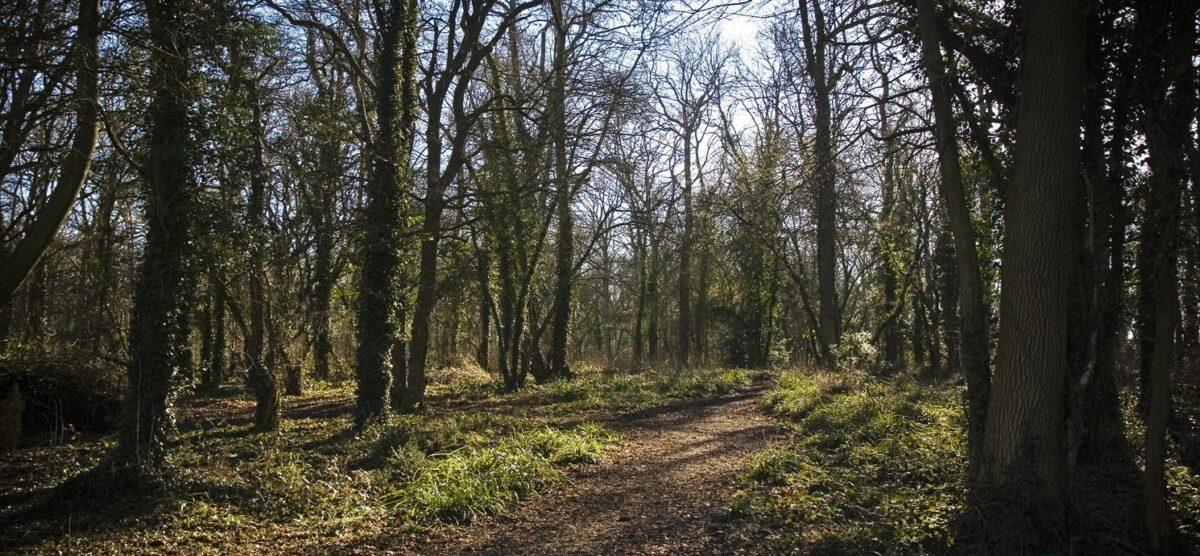 Vincient Woods, Chippenham large photo 1