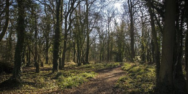 Vincient Woods, Chippenham