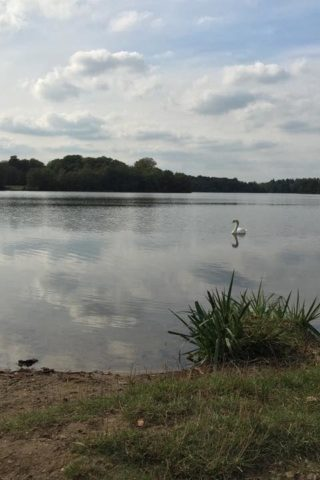Dog walk at Virginia Water photo