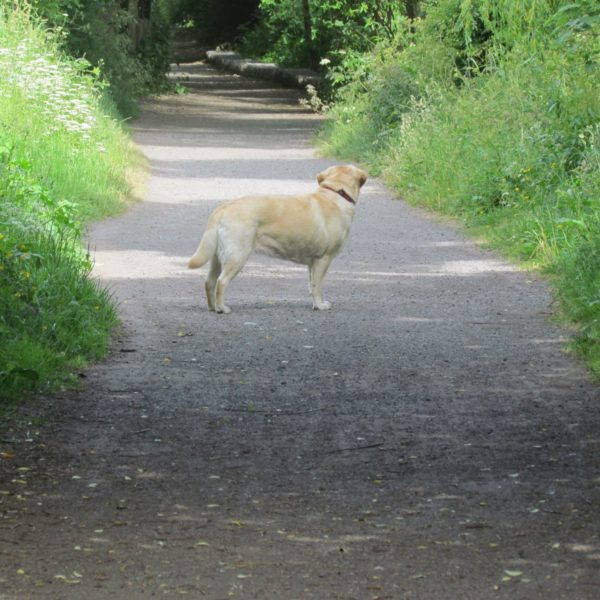 Dog walk at Wagon Ways