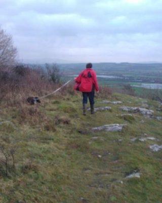 Dog walk at Warton Crag