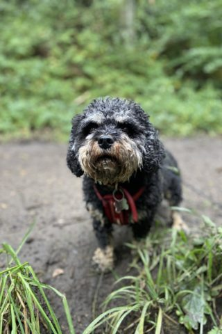 Dog walk at Watergate Forest Park photo