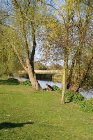 Dog walk at Watermead Country Park photo