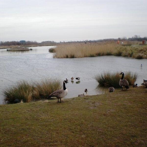 Dog walk at Waters Edge, Barton-upon-Humber
