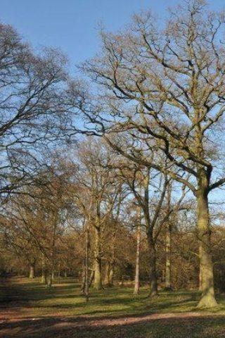 Dog walk at Welcombe Hills, Stratford photo