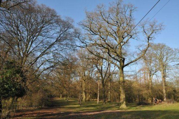 Welcombe Hills, Stratfordphoto