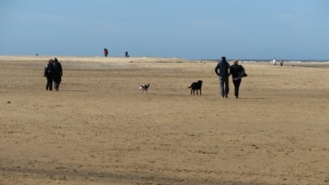 Dog walk at Wells next the sea
