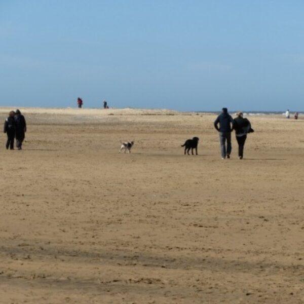 Dog walk at Wells next the sea